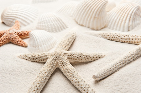 White starfish on white sand with clamshells in the background