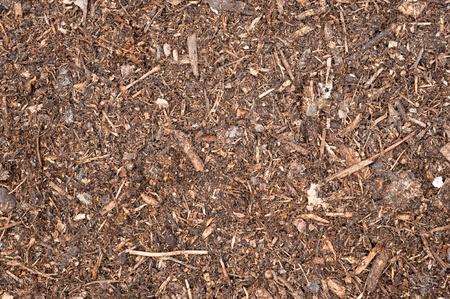 turba: Un imagen de recién propagación turba suelo descendente.