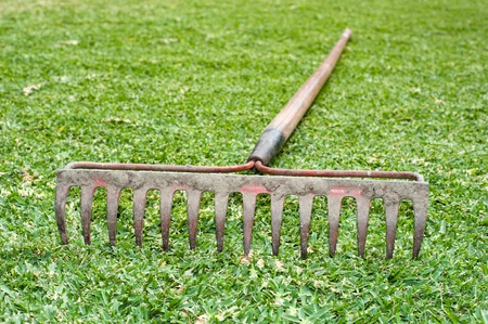 tine: A steel tine rake laying in the grass