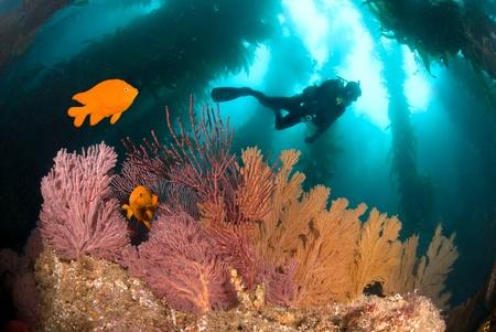 Een kleurrijke onderwater rif met een scuba diver en oranje vissen.