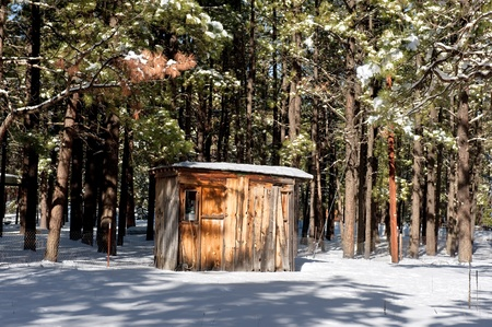 sheds: A small cabinn shack burried in the wilderness trees surrounded by snow. Stock Photo