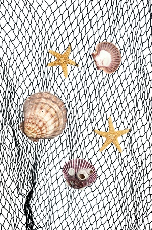 inference: Seashells and starfish caught in a green fishing net for use as an aquatic inference ort decorative background.