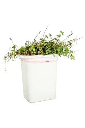 throw away: A white trash can full of trimmed plants, isolated on white, ready to be put in the grennery recycling bin