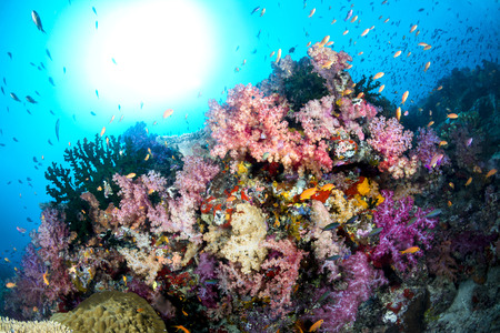 hard coral: Beautiful tropical underwater corals on a reef surrounded by clean, blue water with the sun shining bright in the sky.Shot in Fiji. Stock Photo