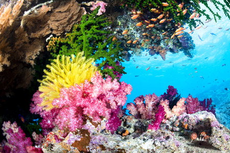 A beautiful, exotic tropical reef covered with vibrant soft and hard corals and a yellow crinoid in clear water. Banque d'images