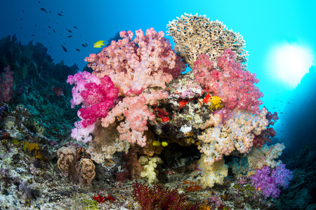 soft coral: A small reef formation in Fiji with multicolored soft corals and a bright ball of sunshine off to the right. Stock Photo