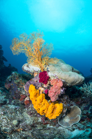 seafan: Image of a beautiful yellow sponge and sea fan gracing a tiny reef structure in Fiji.  Stock Photo