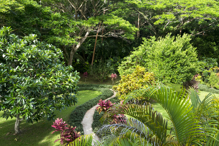 A walking path around a tropical resorts lush garden grounds shows healthy, vibrant trees, shrubs and other exotic growth.