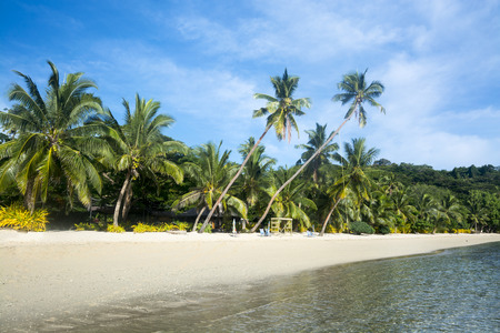 palm lined: A tropical vacation resort beach lined with lush palm trees and white sand is ideal for family getaways.