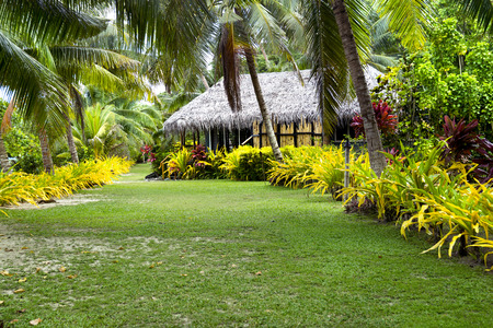 fijian: A Fijian bure along a lush, tropical beach surrounded by palm trees, green grass and many plants.