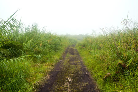 undeveloped: A remote, countryside dirt road lined with green foliage during a foggy day Stock Photo
