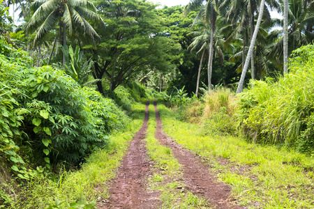 undeveloped: A red dirt road in the mountains of Fiji show the rich, vibrant green plant growth in of a wet, rainforest environment. Stock Photo