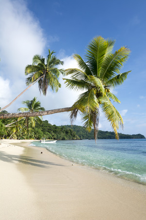 palm lined: Vertical image of an ideal tropical, palm tree lined beach with turquoise water and a big blue sky.