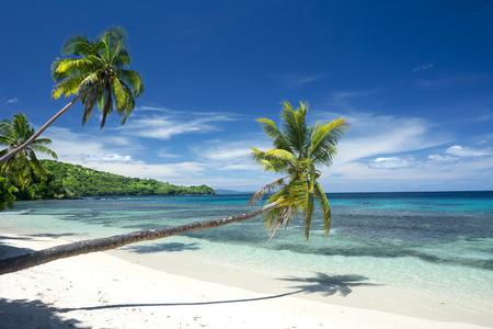 three palm trees: Three palm trees line a white, tropical sand beach highlighted by a beautiful deep blue sky.