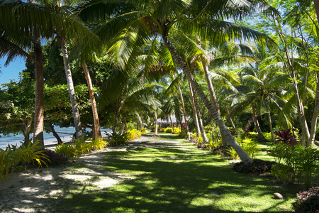 A green walking path at a south pacific tropical resort shows a shaded, grassy walkway to a local bure. photo