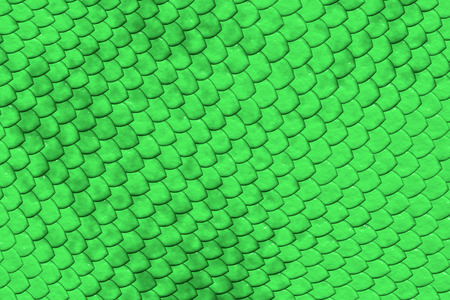 reptile skin: Raster image of green reptile skin showing the unique pattern and protection of the hard scales.