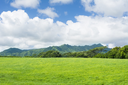 expanse: A wide expanse of green pastures and a vibrant sky in the highlands of Hawaii