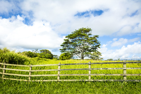 fence: A vibrant, green meadow behind a ranching fence shows the lush growth in a rural farming community on Kauai Hawaii.