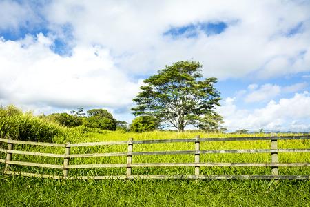 ranching: Un vibrante, verde pradera detr�s de una valla ganadera muestra el crecimiento exuberante en una comunidad agr�cola rural en Kauai Hawaii.