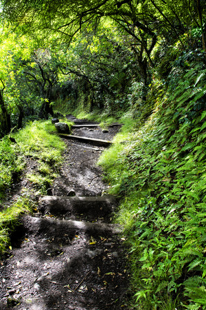 A four-mile wet, muddy trail down a tropical Hawaiian mountain on Molokai leads to a small town of only a handful of residents and is the only access other than by sea.