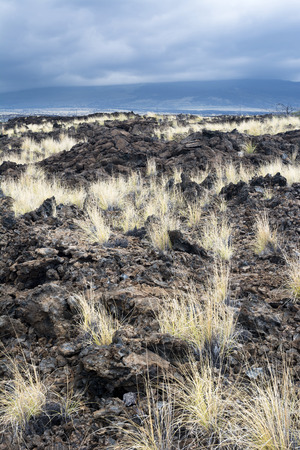 hardened: As years of dried lava rests untouched, grass has taken root and made it way up through the porous, hardened earth. Stock Photo