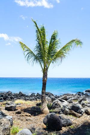 colourful sky: A single palm tree overlooks a tropical beach in Hawaii