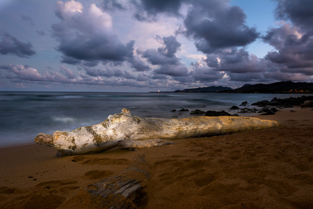ambiance: A log on a beach is Hawaii is painted with light at nighttime during a long shutter speed, creating a surreal, peaceful ambiance