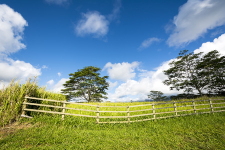 ranching: A vibrant, green meadow behind a ranching fence shows the lush growth in a rural farming community on Kauai Hawaii.