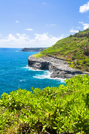 seabird: A shot taken from the Kilauea lighthouse of the rugged coastal cliffs that supports a seabird habitat and sanctuary.