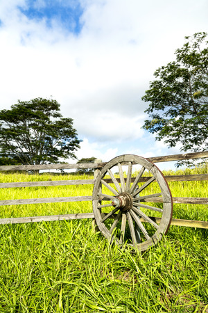ranching: A vibrant, green meadow behind a ranching fence and wagon wheel shows the lush growth in a rural farming community on Kauai Hawaii. Stock Photo