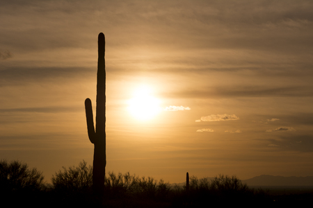 superstition: An image of a saguaro cactus during sunset at Superstition desert in Arizona shows the rugged detail of a dry, parched wilderness