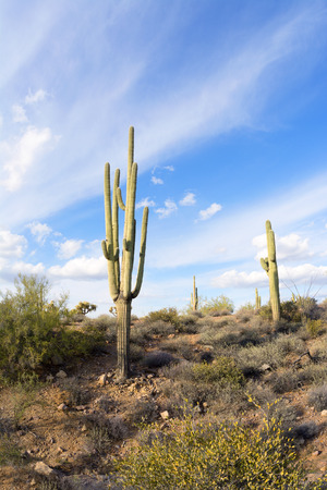 superstition: An image of the Superstition desert in Arizona shows the rugged detail of a dry wilderness with a saguaro cactus Stock Photo