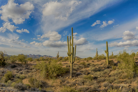 rugged: An image of the Superstition desert in Arizona shows the rugged detail of a dry wilderness with a saguaro cactus Stock Photo