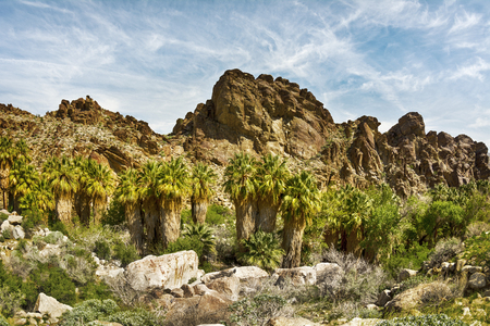 Scenic view of a rocky mountainside in Palm Springs framed with a row of palm trees and other natural foliage.