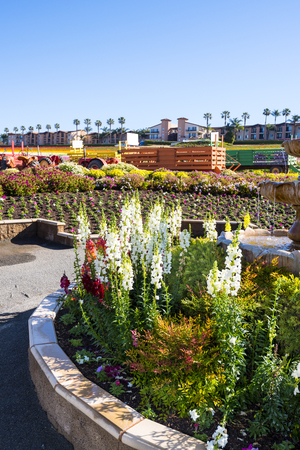 sightseers: In springtime the Flower Fields in San Diego California are in full bloom and vibrant gardens line the entire perimeter of the floral park, with wagons that are towed by tractors for sightseers. Stock Photo