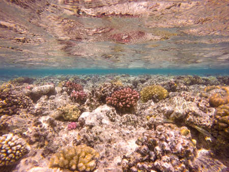 warm water fish: Colourful vibrant coral reef underwater in the Red Sea