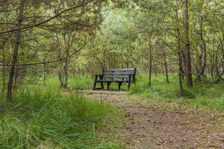 within: An empty bench set within a beautiful green forest