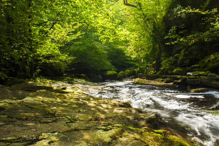 located: A peaceful, quiet stream located in the middle of a beautiful rural green forest