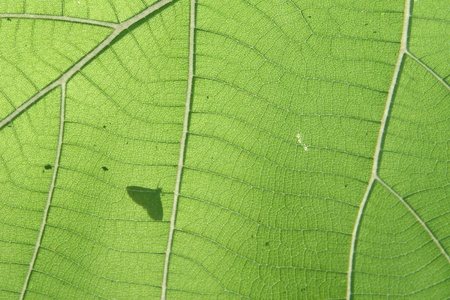 structured: A green leaf texture with shadow of butterfly  Stock Photo