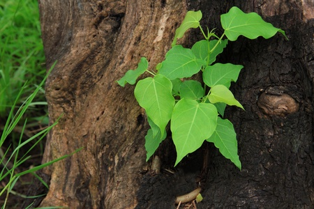 ecosavy: Young green tree seedling grow from the old stump (Think Green concept)view2