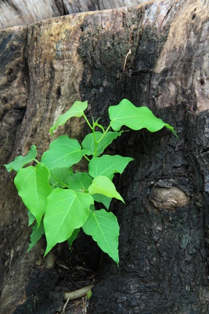 ecosavy: Young green tree seedling grow from the old stump (Think Green concept) view4