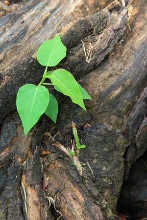 ecosavy: Young green tree seedling grow from the old stump (Think Green concept) view3