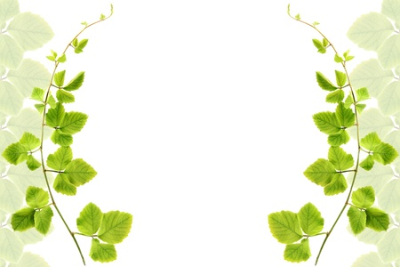 Frame made from green leafs isolated on white background with space for text.