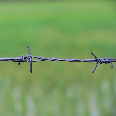 barbed wire frame: Barbed wires against green background. Stock Photo