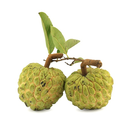annona: Sugar apple [Annona squamosa] on white background