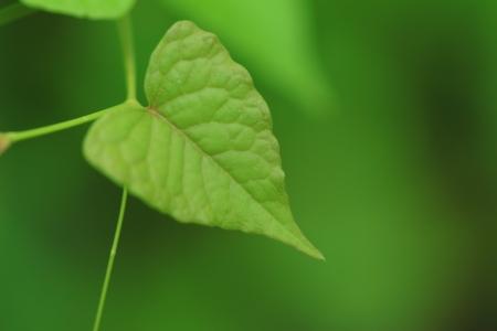 Closeup of fresh green leaf, green background