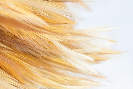 Chicken feather,Feather Brown