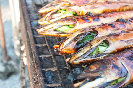 Herb Grilled Fish Thailand  Stock Photo