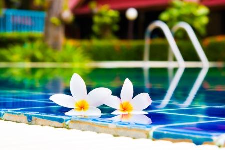 Frangipani and pool
