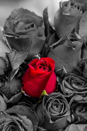 Stehend in einer Menschenmenge rote Rose Lizenzfreie Bilder